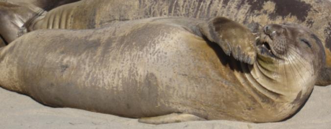 N E Seal