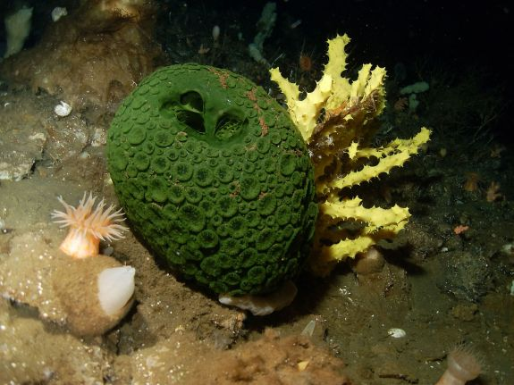 sea_sponges