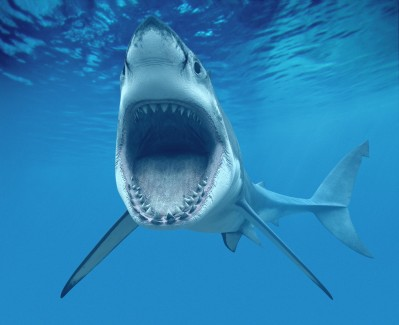 shark longevity